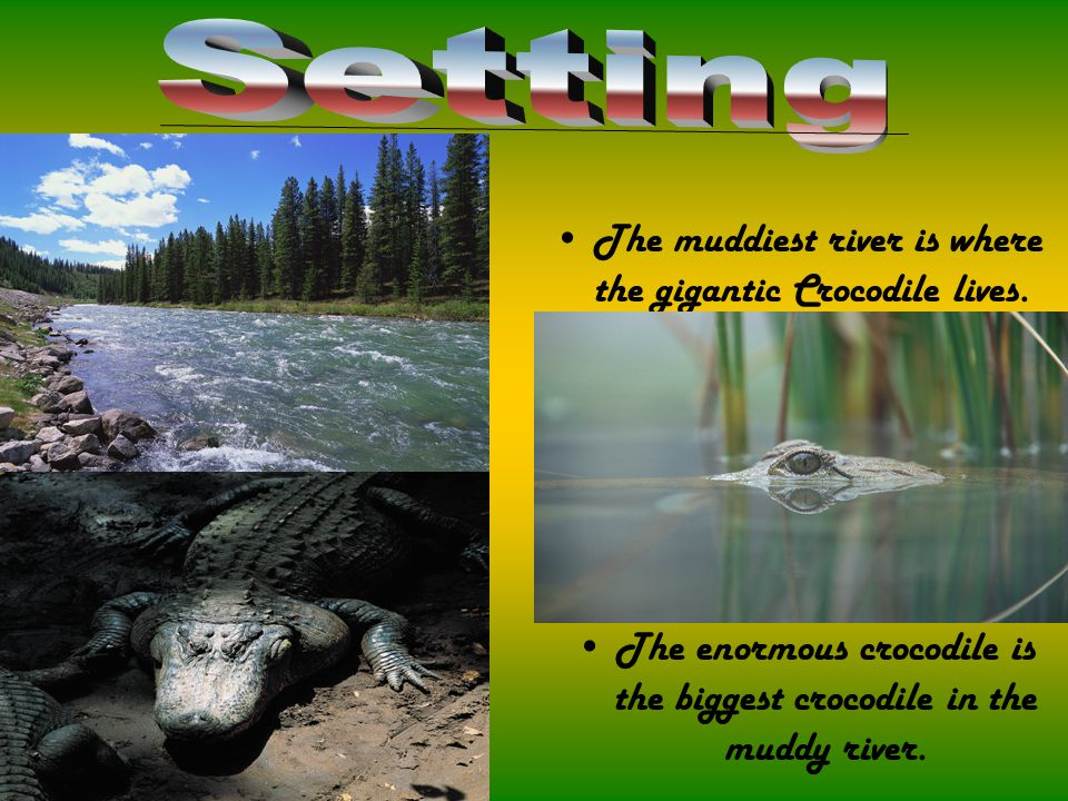 The enormous crocodile is the biggest crocodile in the muddy river.