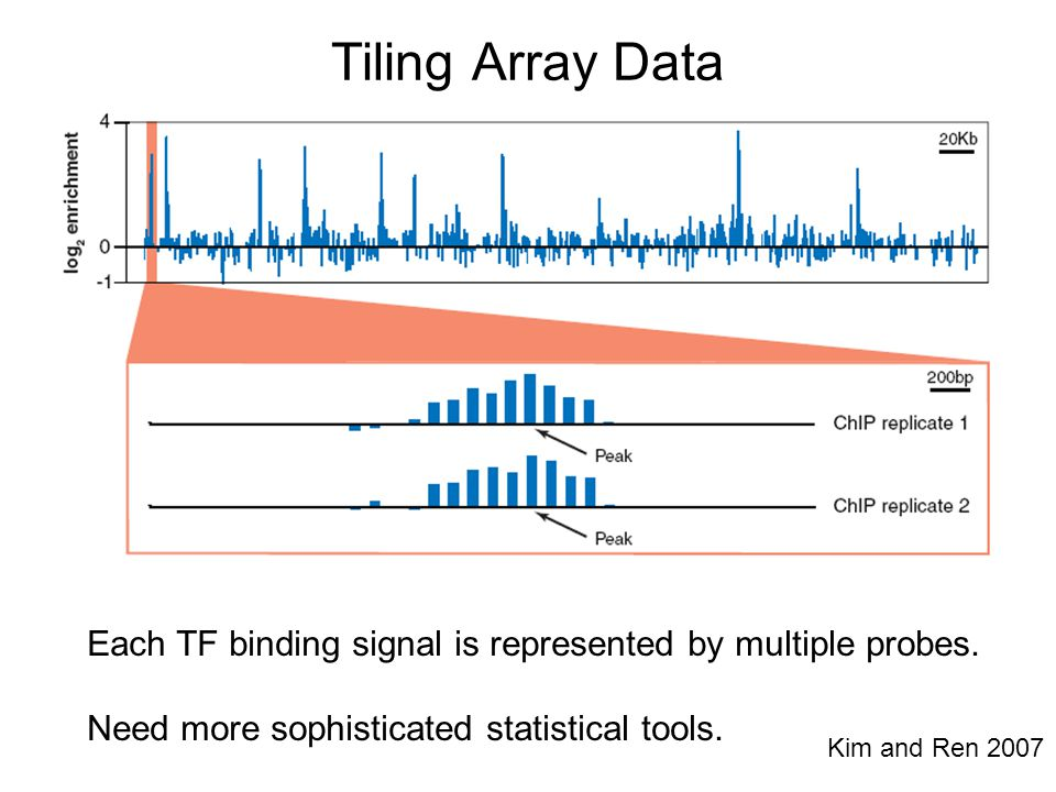Tiling Array Data Each TF binding signal is represented by multiple probes. Need more sophisticated statistical tools.
