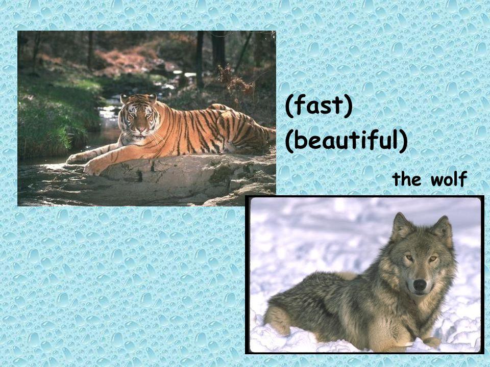 (fast) (beautiful) the wolf