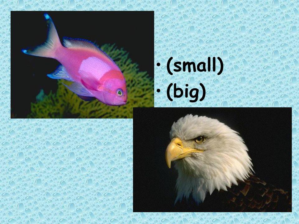 (small) (big)