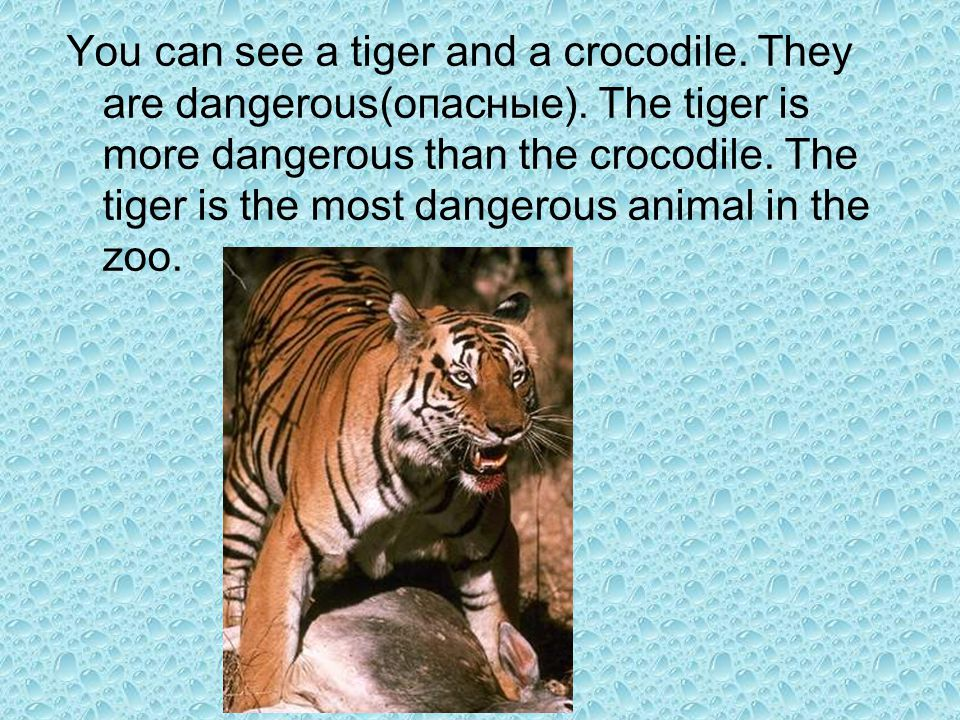 You can see a tiger and a crocodile. They are dangerous(опасные)