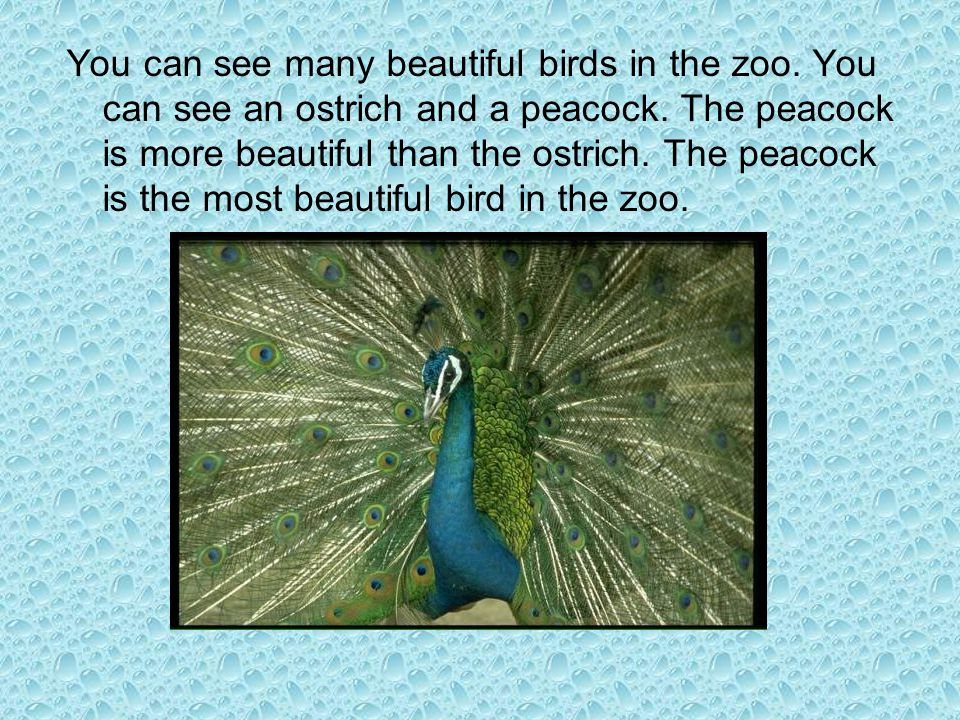 You can see many beautiful birds in the zoo