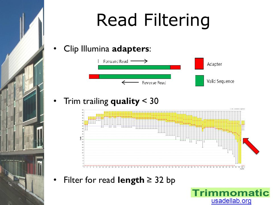 Read Filtering Clip Illumina adapters: Trim trailing quality < 30