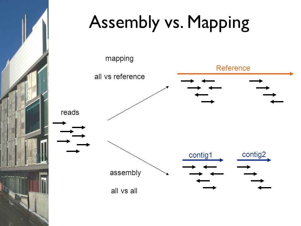 Assembly vs. Mapping mapping all vs reference Reference reads contig1