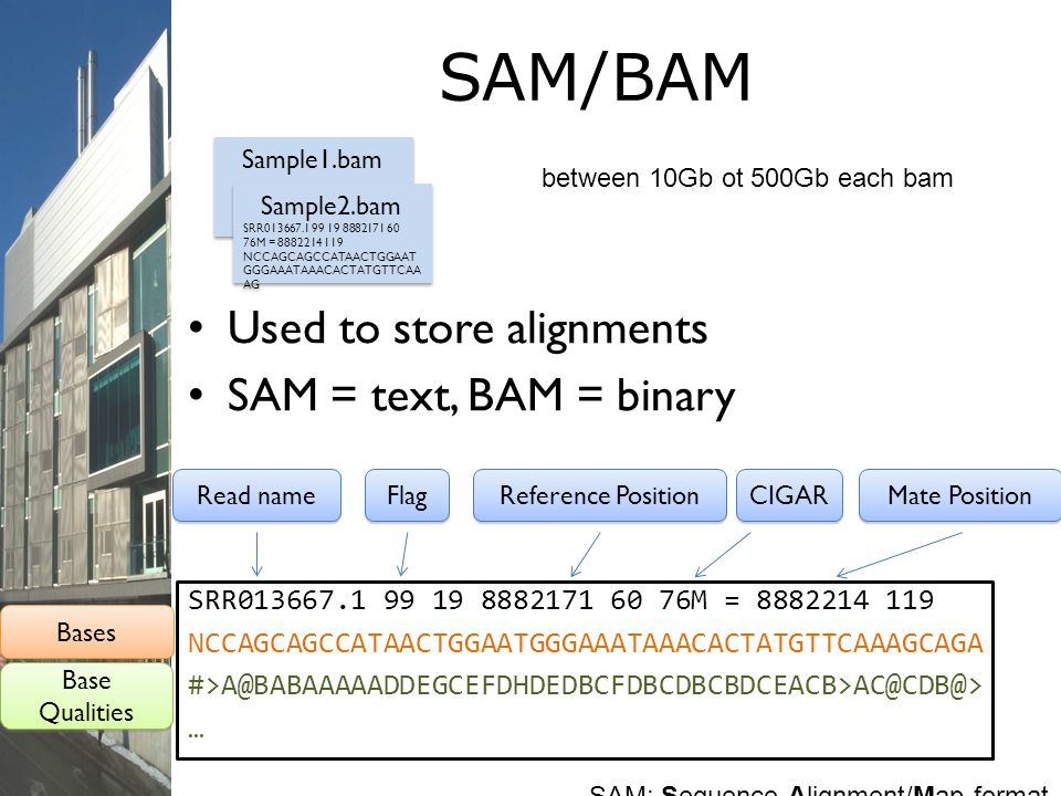SAM/BAM Used to store alignments SAM = text, BAM = binary