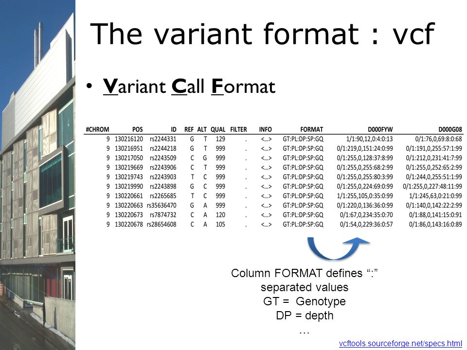 The variant format : vcf