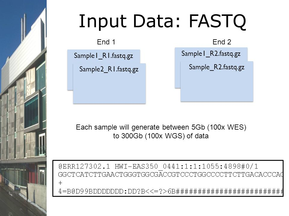 Input Data: FASTQ End 1 End 2 Sample1_R2.fastq.gz Sample1_R1.fastq.gz