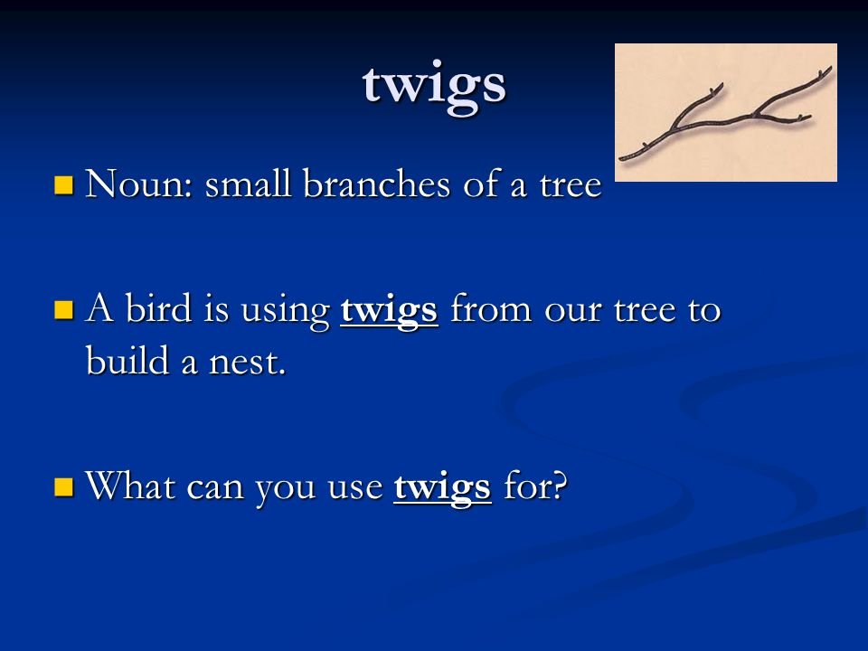 twigs Noun: small branches of a tree