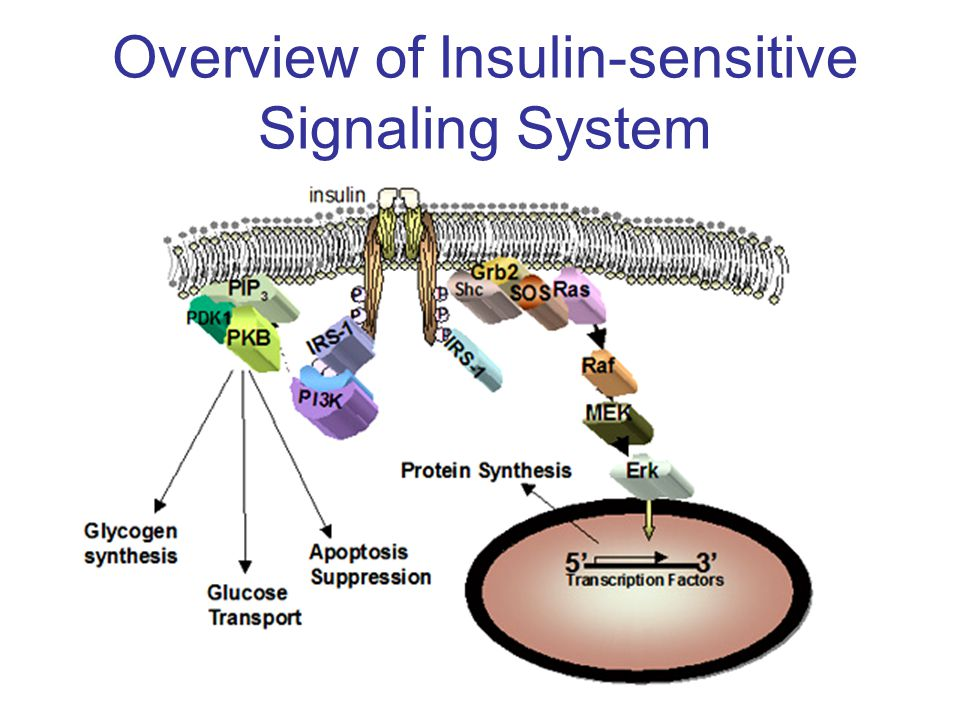 Overview of Insulin-sensitive Signaling System