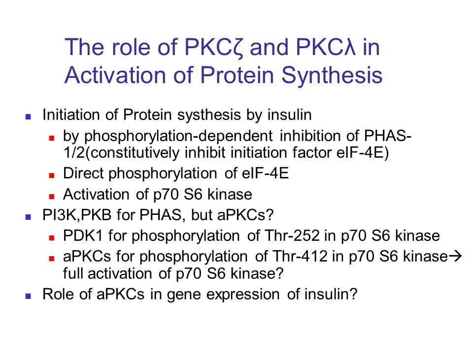 The role of PKCζ and PKCλ in Activation of Protein Synthesis