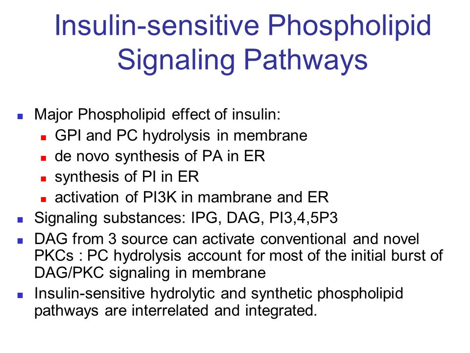 Insulin-sensitive Phospholipid Signaling Pathways