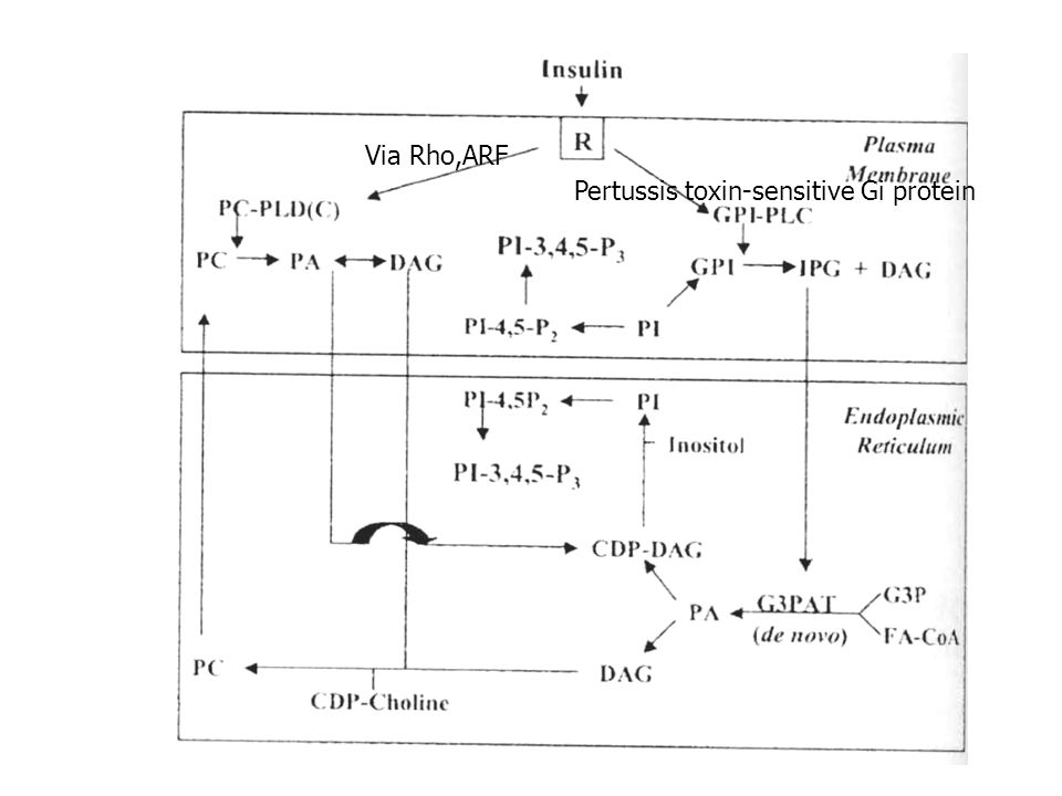 Pertussis toxin-sensitive Gi protein