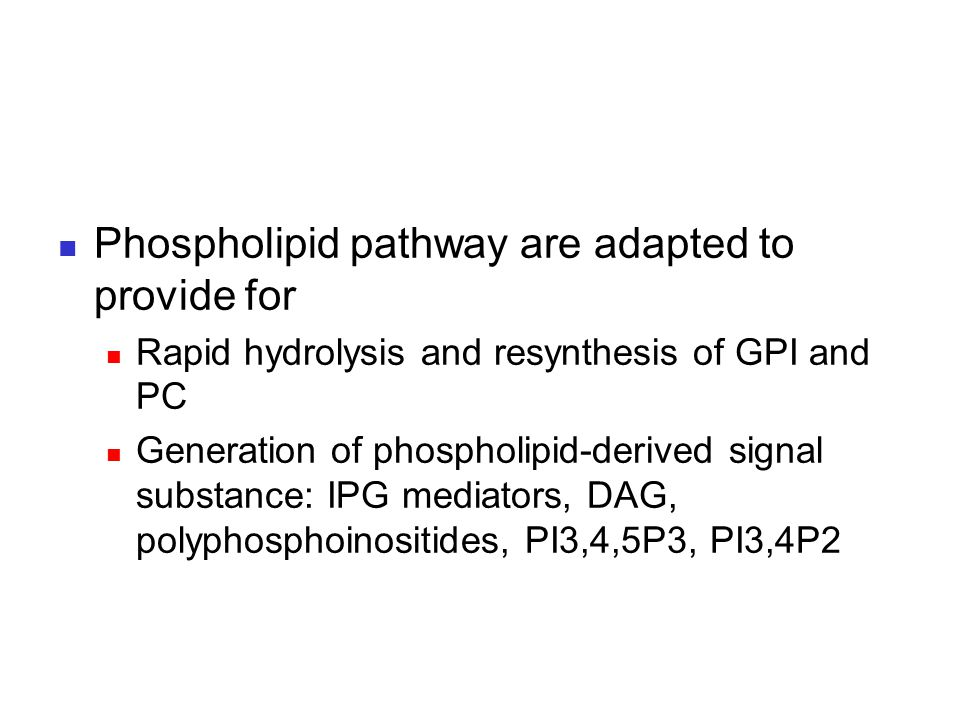 Phospholipid pathway are adapted to provide for