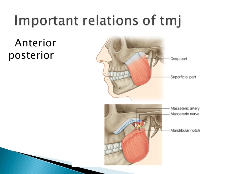Important relations of tmj