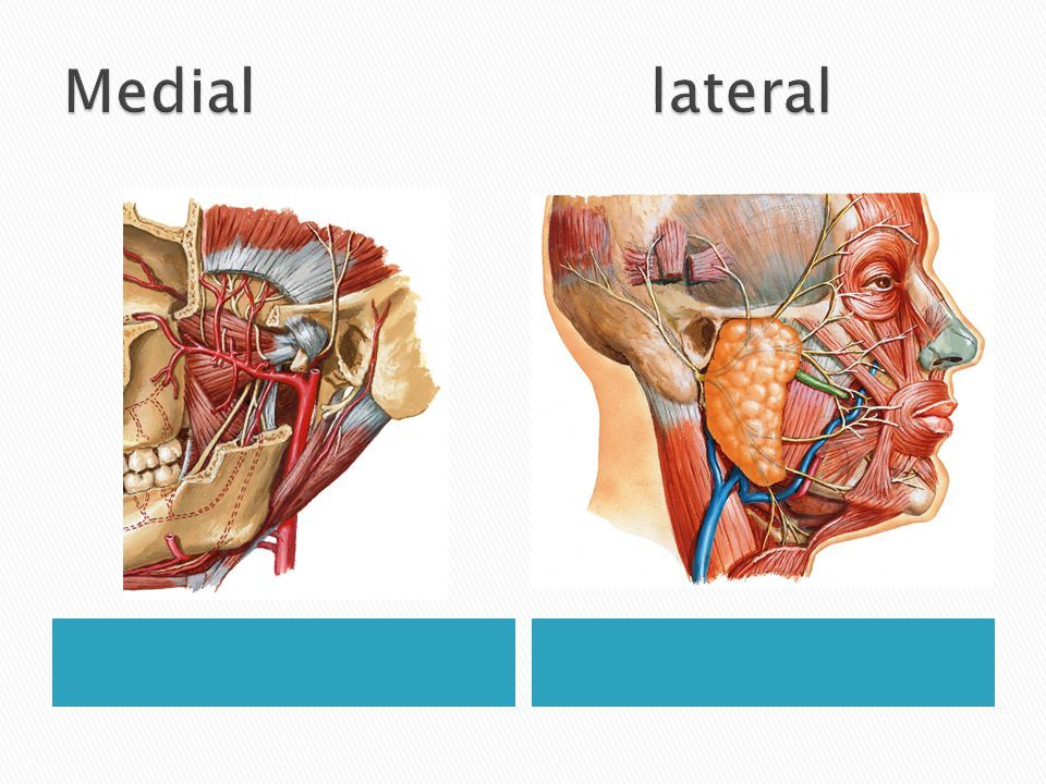 Medial lateral