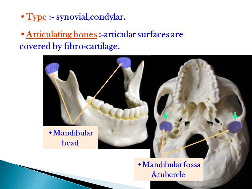 Mandibular fossa &tubercle