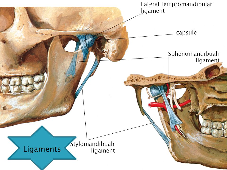 ligaments The lateral tempromandibular ligament Ligaments