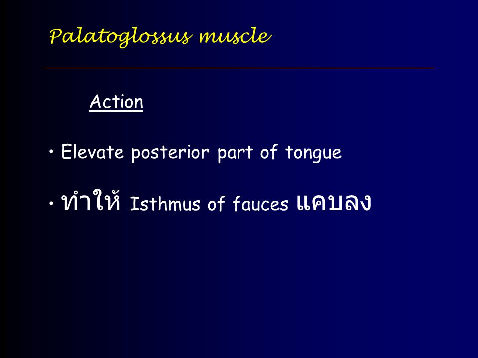Palatoglossus muscle Action Elevate posterior part of tongue ทำให้ Isthmus of fauces แคบลง