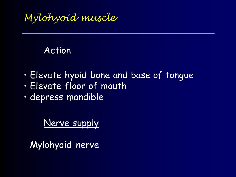 Mylohyoid muscle Action. Elevate hyoid bone and base of tongue. Elevate floor of mouth. depress mandible.