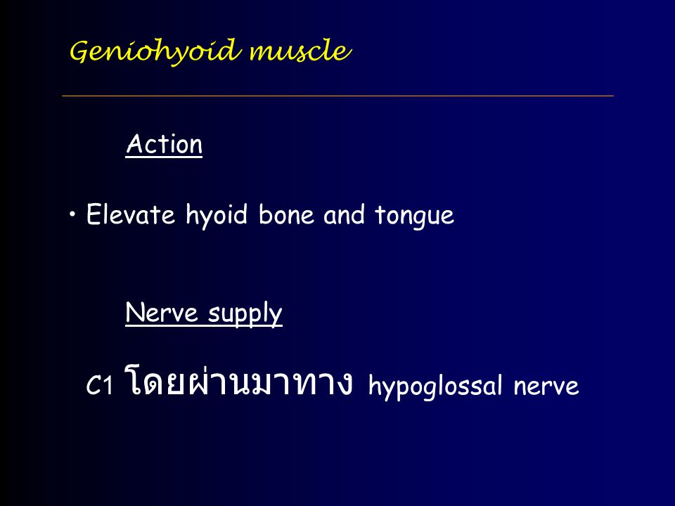 Geniohyoid muscle Action. Elevate hyoid bone and tongue.