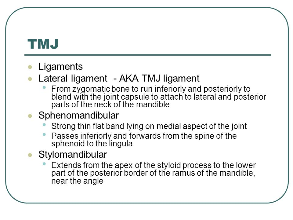TMJ Ligaments Lateral ligament - AKA TMJ ligament Sphenomandibular