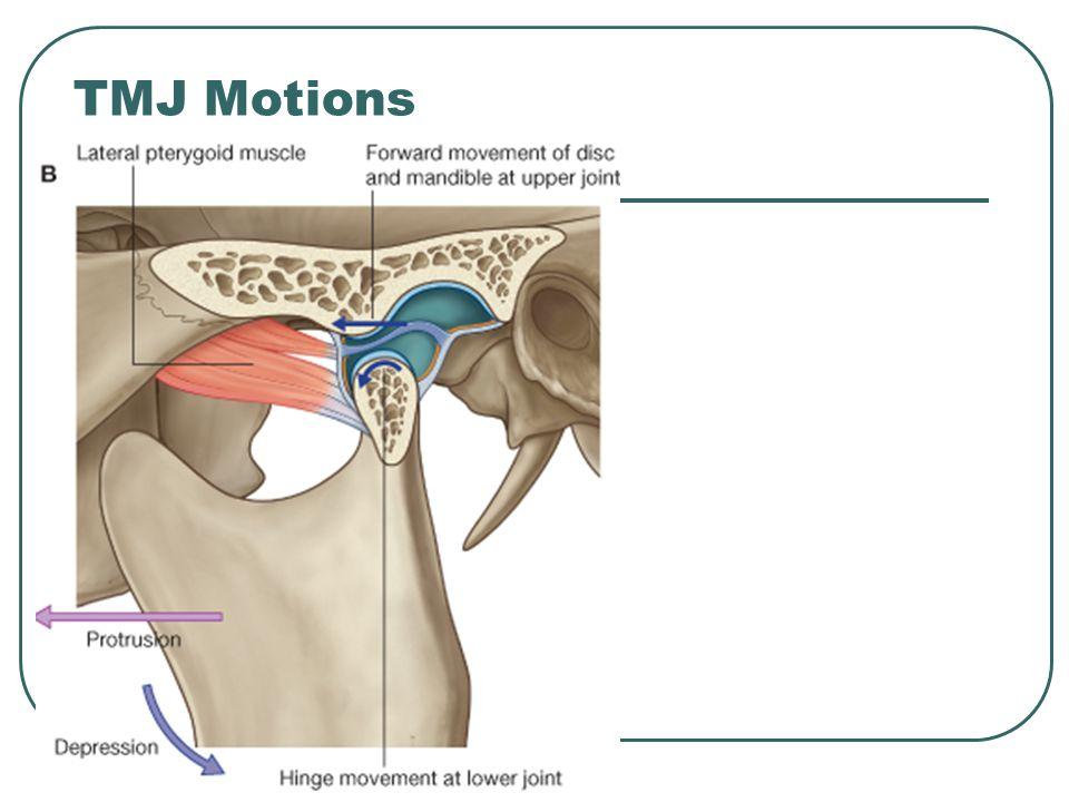 TMJ Motions
