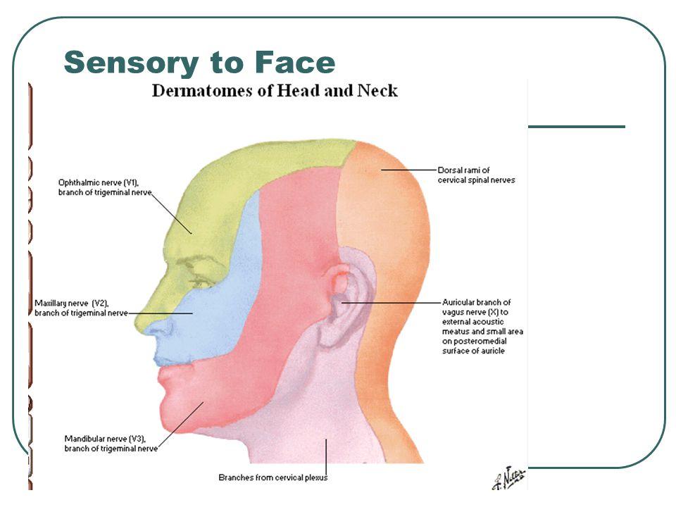 Sensory to Face
