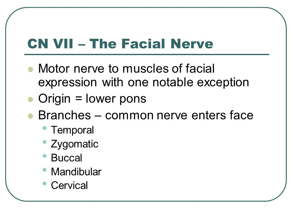 CN VII – The Facial Nerve