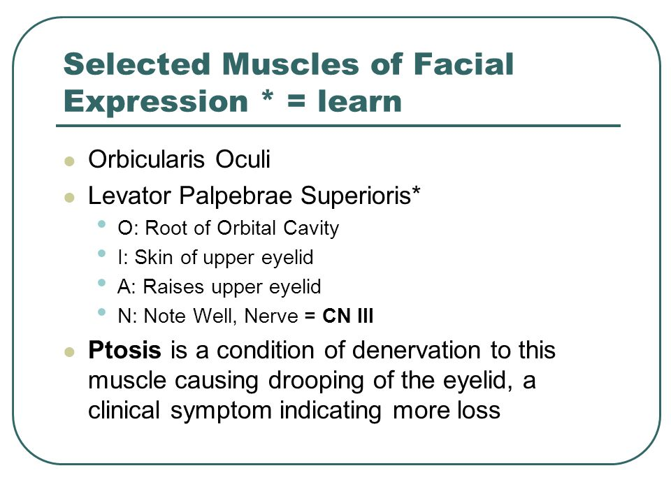 Selected Muscles of Facial Expression * = learn