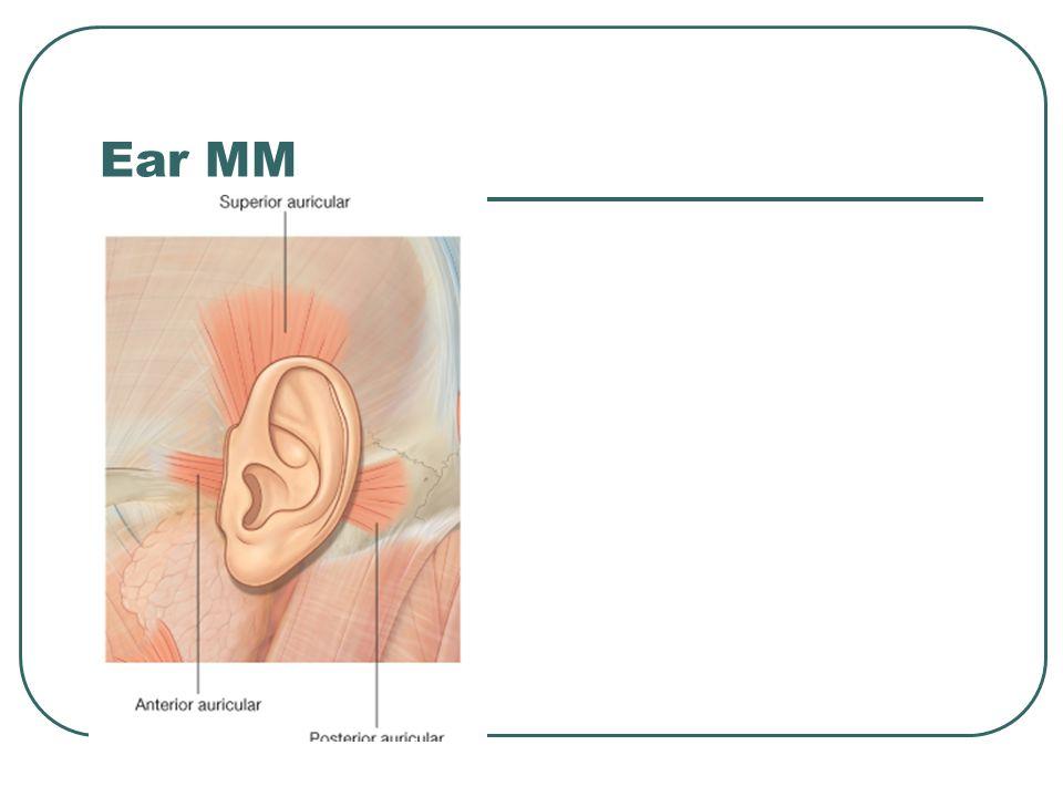 Ear MM