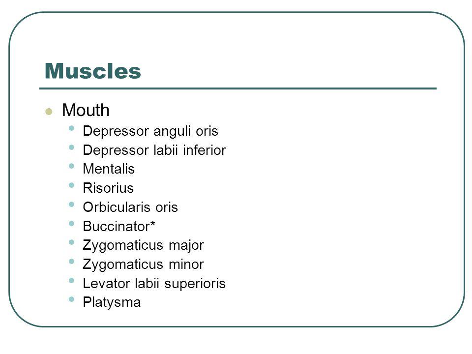 Muscles Mouth Depressor anguli oris Depressor labii inferior Mentalis