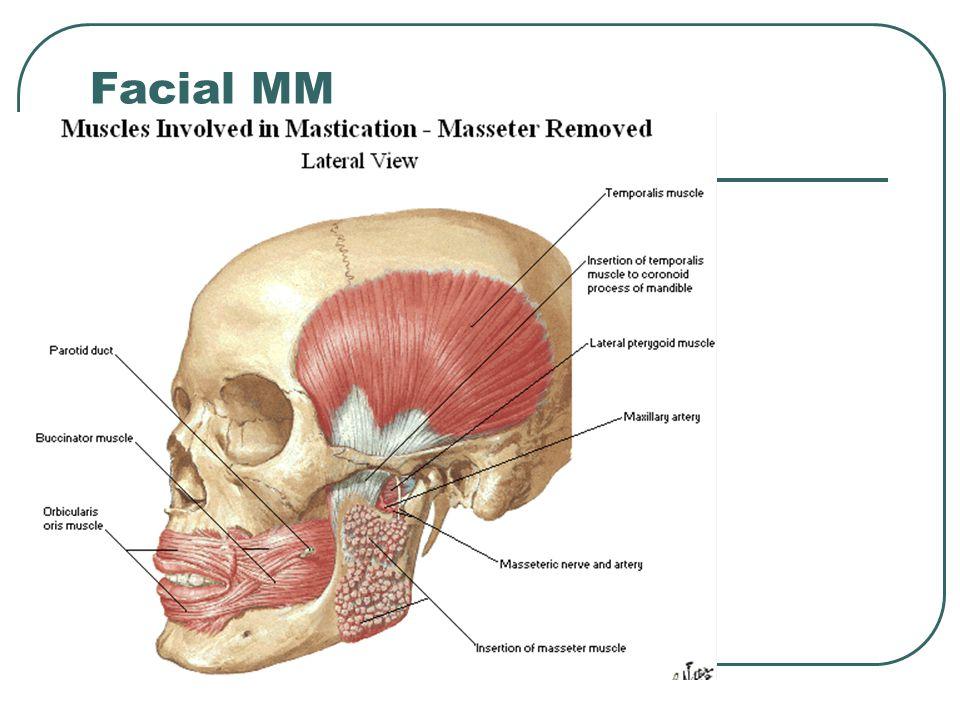 Facial MM
