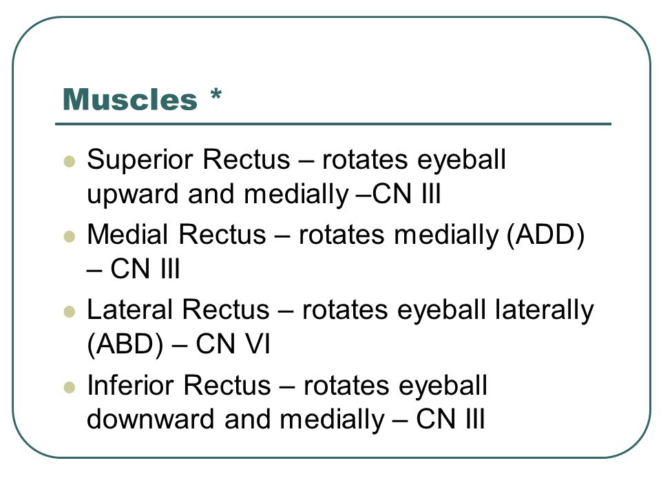 Muscles * Superior Rectus – rotates eyeball upward and medially –CN III. Medial Rectus – rotates medially (ADD) – CN III.