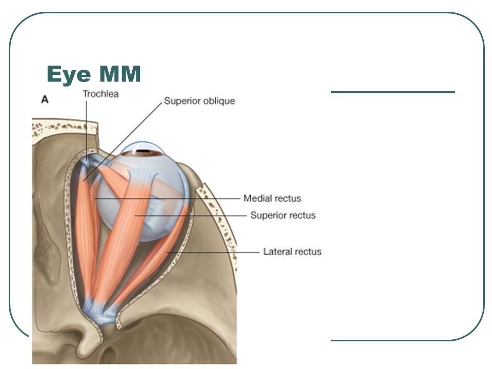 Eye MM