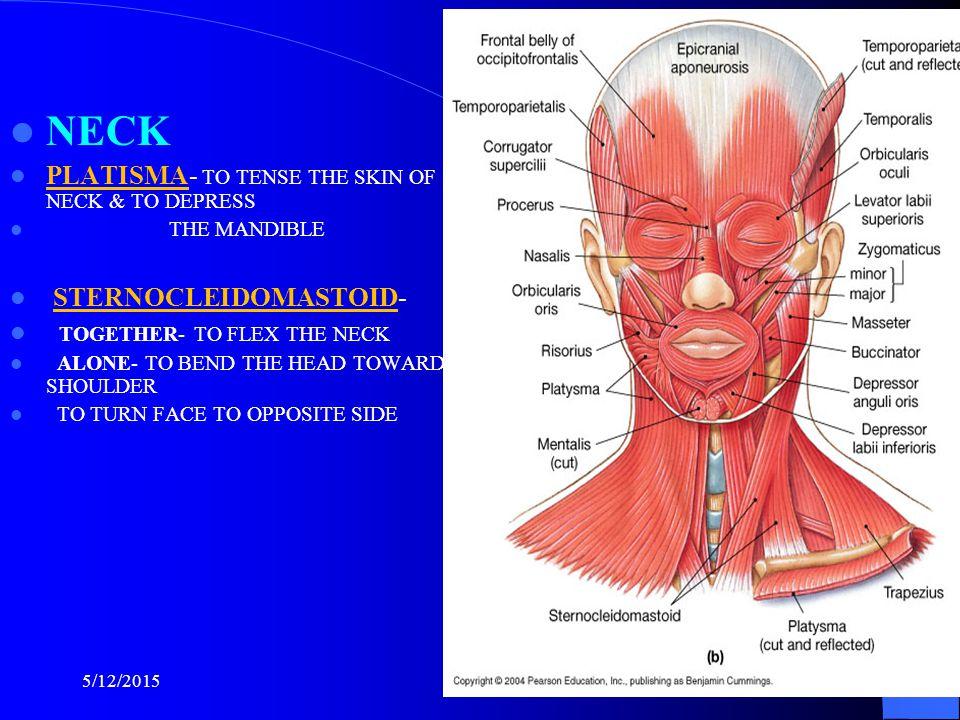 NECK PLATISMA- TO TENSE THE SKIN OF NECK & TO DEPRESS