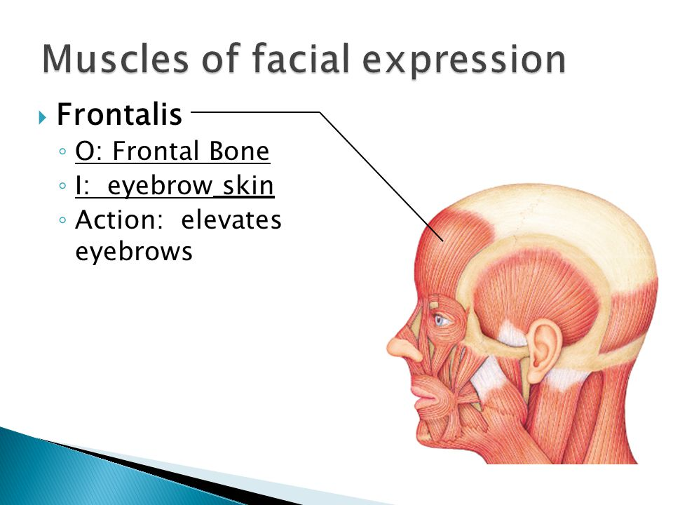 Muscles Of Facial Expression Ppt Video Online Download