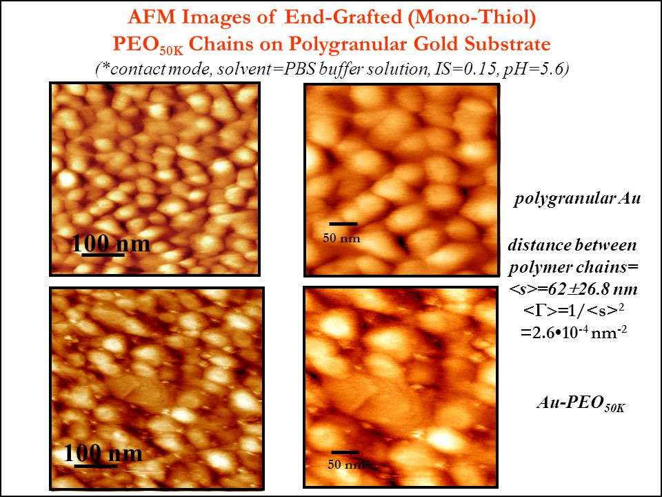 100 nm 100 nm AFM Images of End-Grafted (Mono-Thiol)