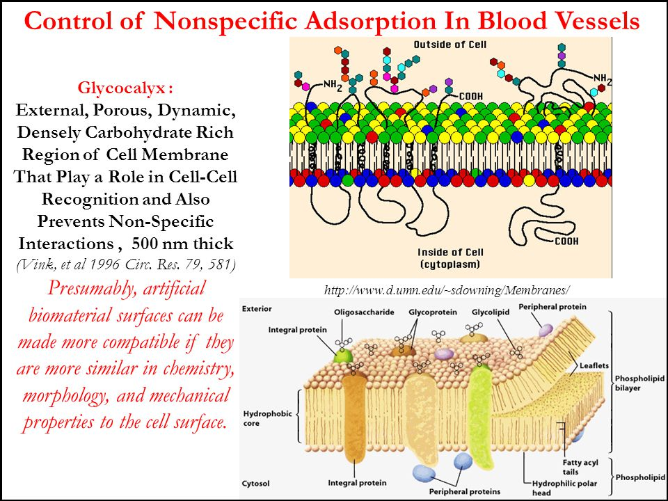 Control of Nonspecific Adsorption In Blood Vessels