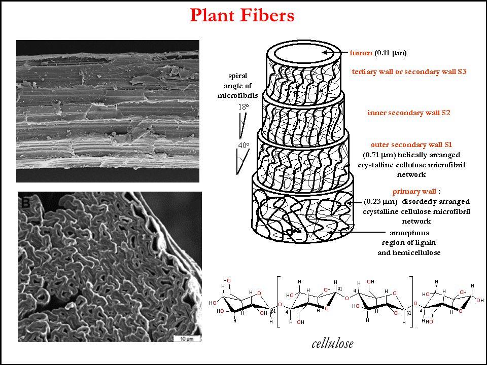 Plant Fibers cellulose