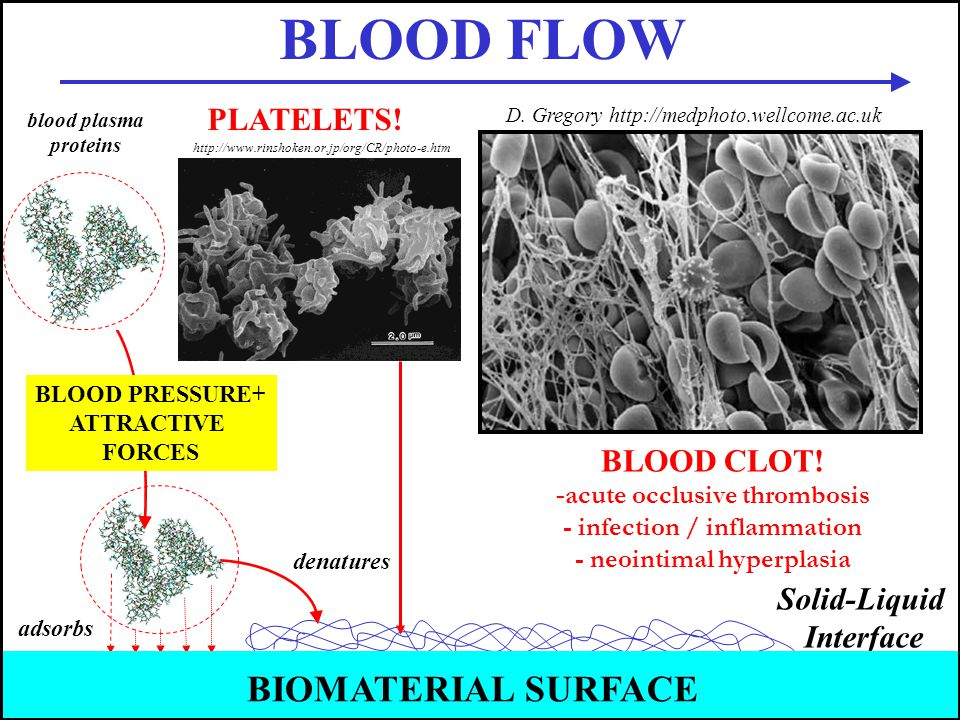BLOOD FLOW BIOMATERIAL SURFACE PLATELETS! BLOOD CLOT! Solid-Liquid