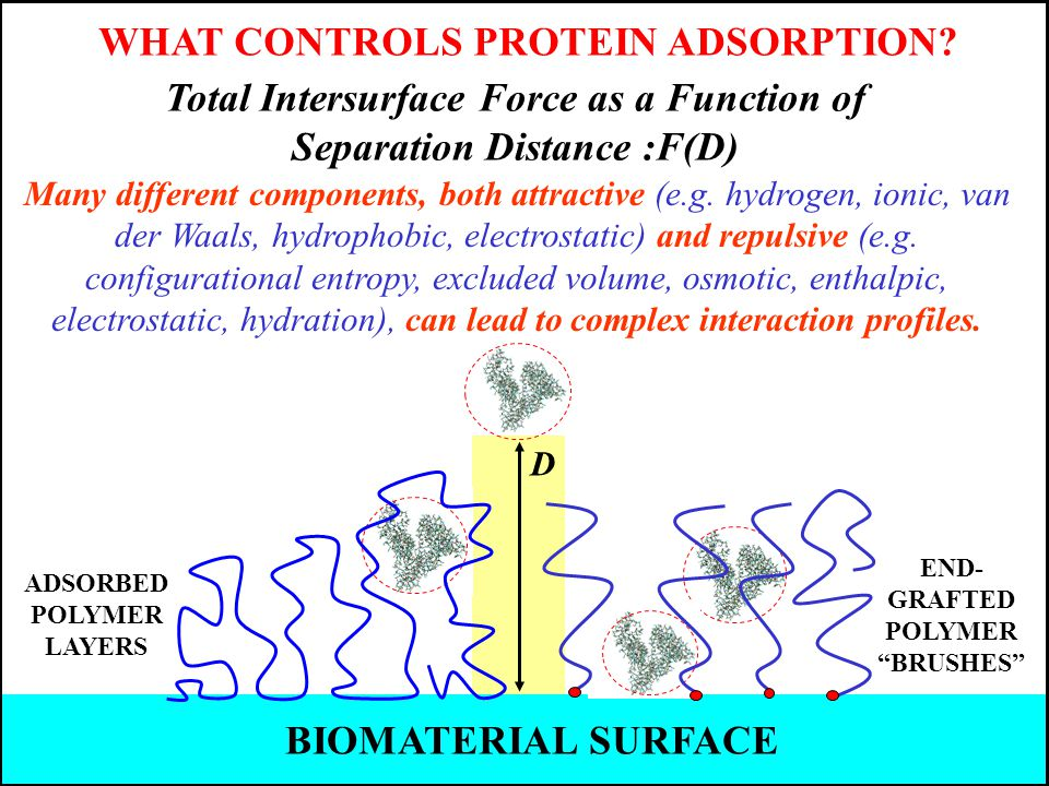 WHAT CONTROLS PROTEIN ADSORPTION