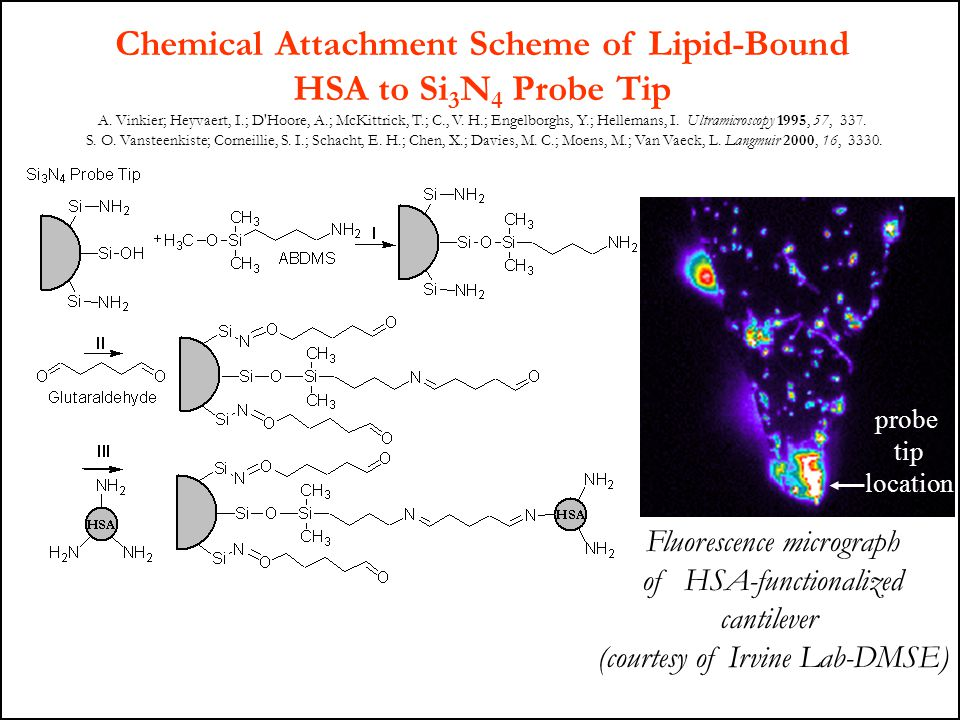 Chemical Attachment Scheme of Lipid-Bound
