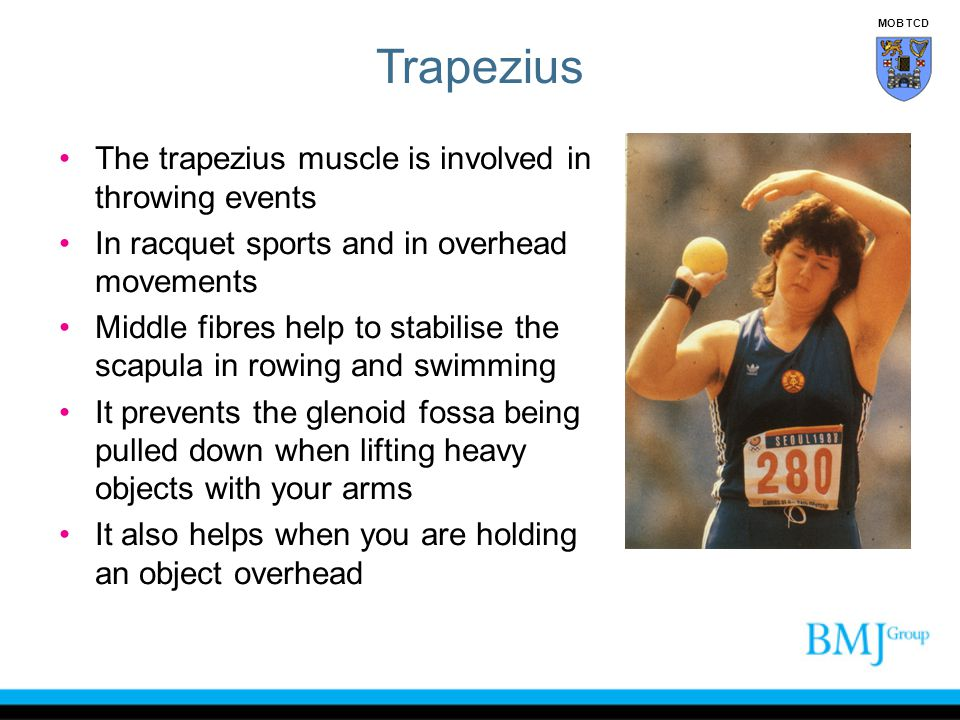 Trapezius The trapezius muscle is involved in throwing events