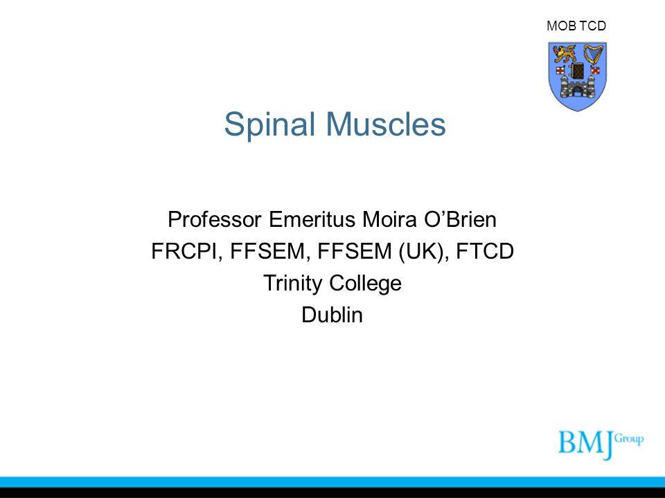 Spinal Muscles Professor Emeritus Moira O'Brien