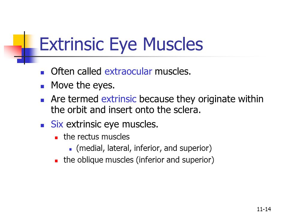 Extrinsic Eye Muscles Often called extraocular muscles. Move the eyes.