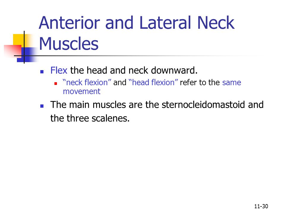 Anterior and Lateral Neck Muscles