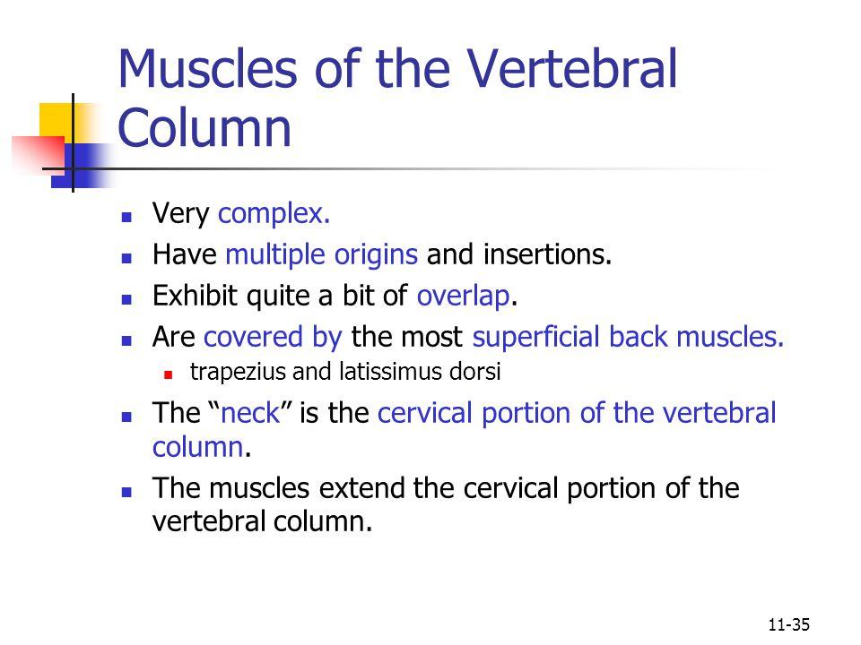 Muscles of the Vertebral Column