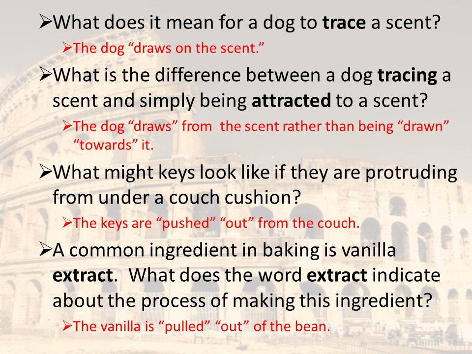 What does it mean for a dog to trace a scent