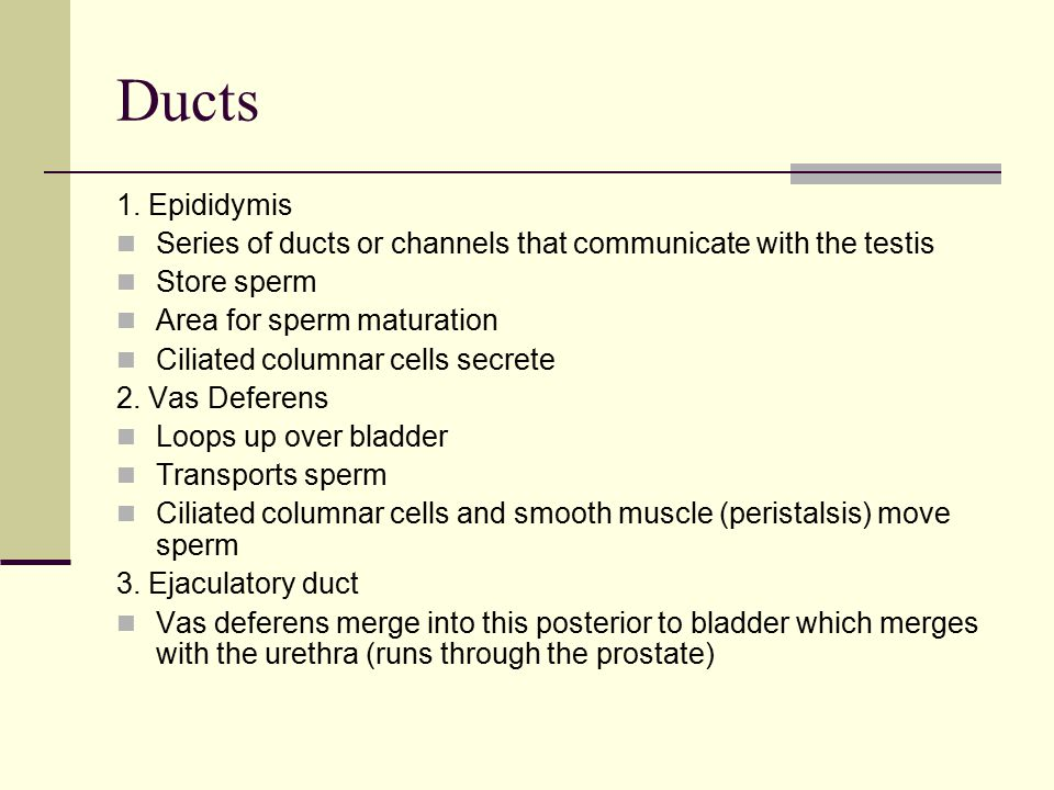 Ducts 1. Epididymis. Series of ducts or channels that communicate with the testis. Store sperm. Area for sperm maturation.