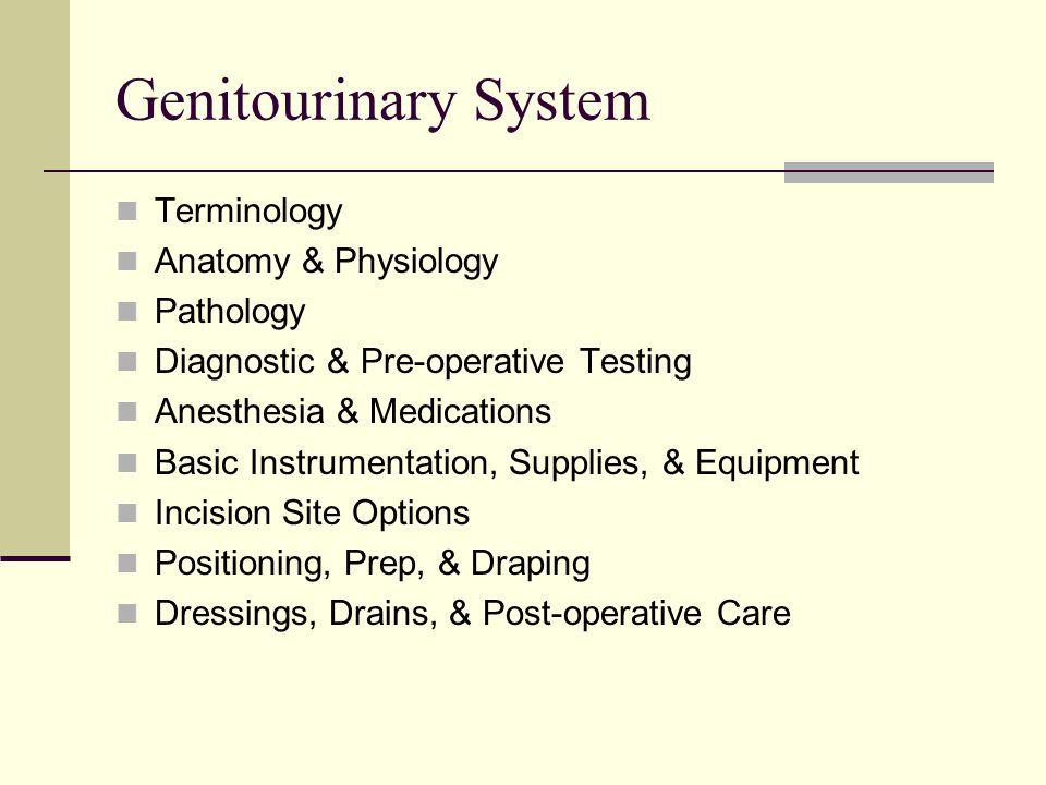 Genitourinary System Terminology Anatomy & Physiology Pathology